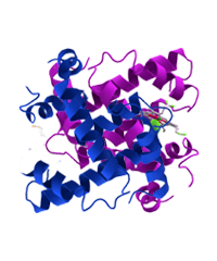 Class 11th - Proteins Image